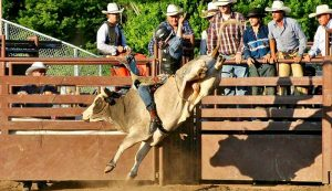 Bull Bash @ Outdoor Arena